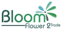 Bloom Flower