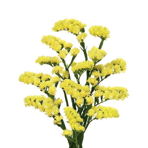 Fillers bloom flower statice yellow mightylinksfo